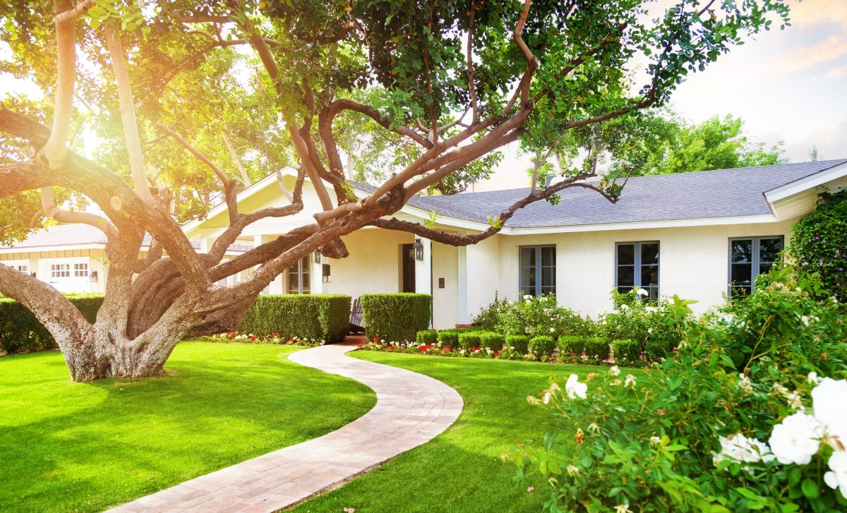 How to Prevent Tree Roots in Sewer Lines & Drain Pipes